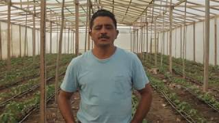 Climate Smart Agricultural Practices In Belize