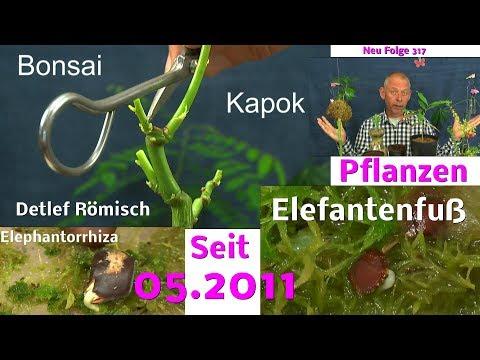 Pflanzen Anzucht Spezial mit Bonsai in der Serie Folge 317