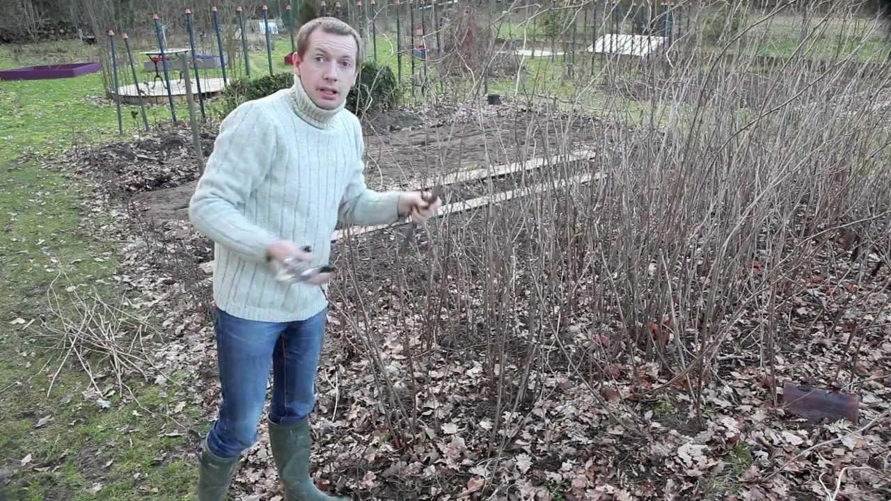 Comment tailler des framboisiers dans son jardin youtube - Comment planter des framboisiers ...