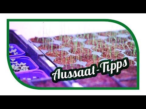 Aussaat Tipps | Jungpflanzenanzucht im Januar
