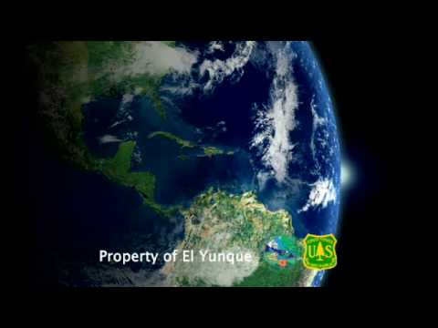 A Journey to El Yunque - Benicio del Toro Video