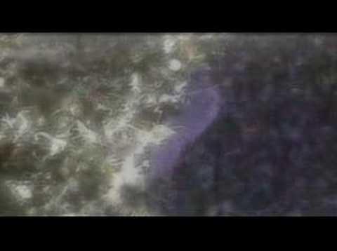 Xxx4 video