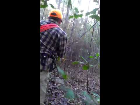 Bear Hunting Harrellsville NC 12/14/12