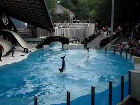 dolphins-jumping-at-marineland.html