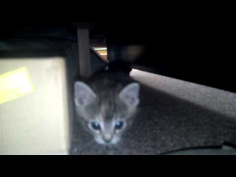 Cute kitty cats playing & making kitty sounds