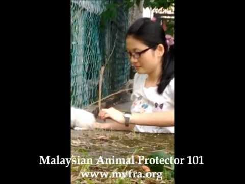 Malaysian Animal Protect 101