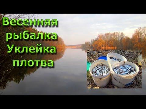 Отличная Весенняя Рыбалка \ Уклейка Плотва