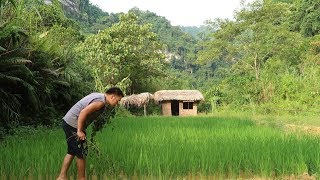 Primitive Skills: Baby fish & Take care of rice fields