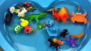 Zoo animals for kids Learn colors with animals for kids Learn wild zoo animals names and sounds