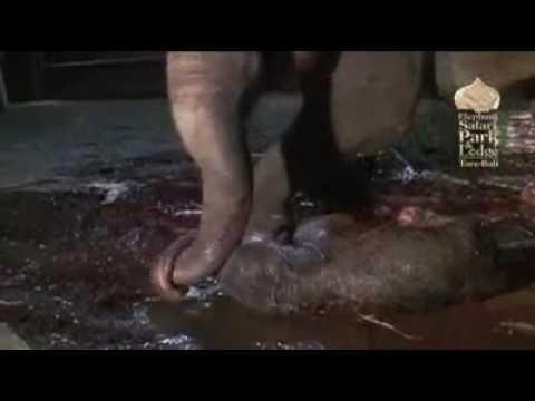 فيلم لمولد فيل