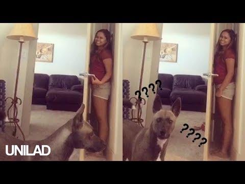 【かくれんぼ】ドアと壁の間に隠れているご主人を探せない犬がまるでコント(笑)