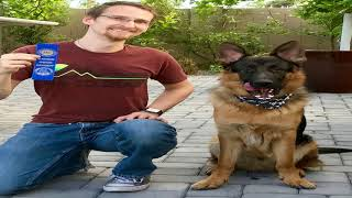 Learn about canine good citizen | what is akc certified