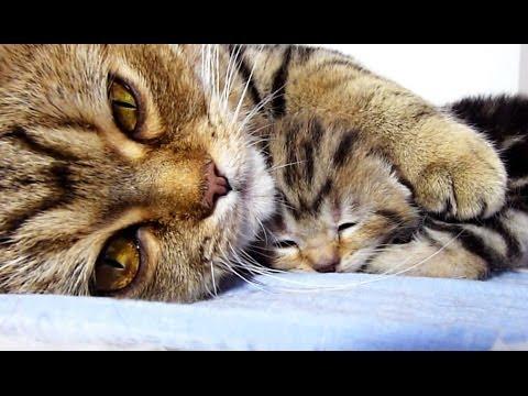 Video If Mama Cat Hugging Baby