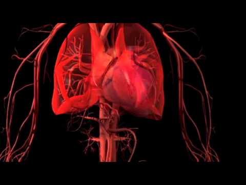 What is Disease? full 6 minute 3D HD video