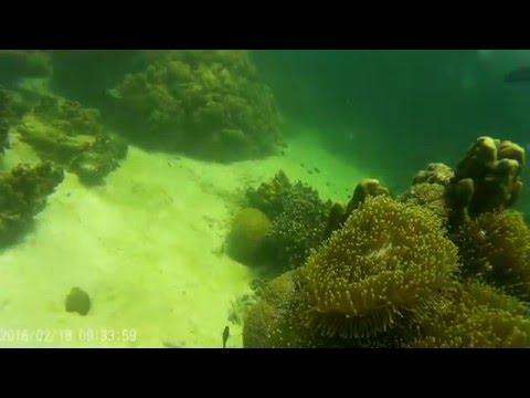 Scuba Diving Langkawi, Malaysia - Underwater World HD