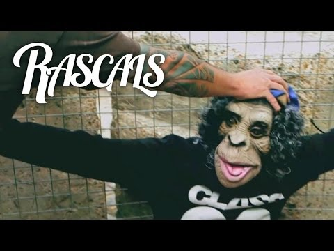 RASCALS - Ape Shit (Explicit)
