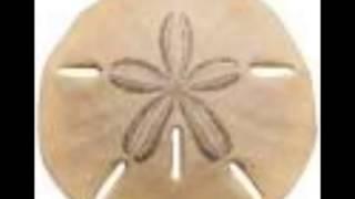 Stavesacre - Sand Dollar