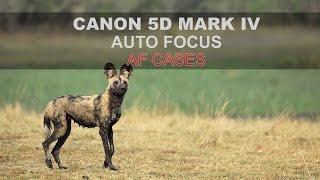 Canon 5D Mk IV - Autofocus: Part 4/4 -  AF Cases