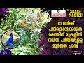 Broad-hooded snake on tree eludes Vava Suresh | Snakemaster EP 429 | Kaumudy TV