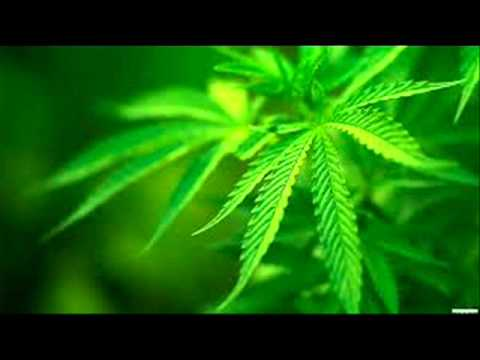 Brand New**2013 Ganja Smoker Vol 2 video