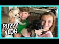 Download THE DAILY ROUTINE OF HERSHEY AND HARLEY | OUR PUPPY VLOG | We Are The Davises in Mp3, Mp4 and 3GP