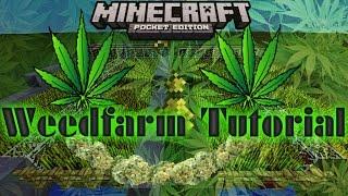 [MInecraft PE] Weed Farm Tutorial ( Wheat Farm )