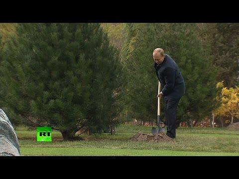 В рамках саммита АТЭС Владимир Путин посадил дерево