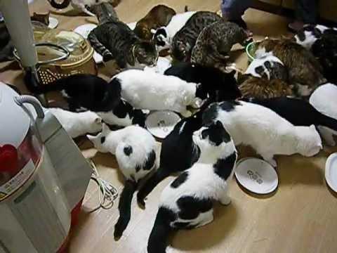 猫家族の食事風景  Dining landscape of the cat family