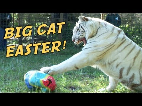 Big Cat Easter!
