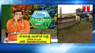 Chenu Chelaka | Farmer Manoj Reddy About Dairy Farm | Telangana  live Telugu