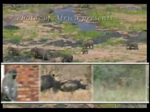 Kruger National Park - South Africa Travel Channel 24
