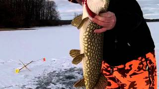Ice Fishing Northern Pike With Tip Ups