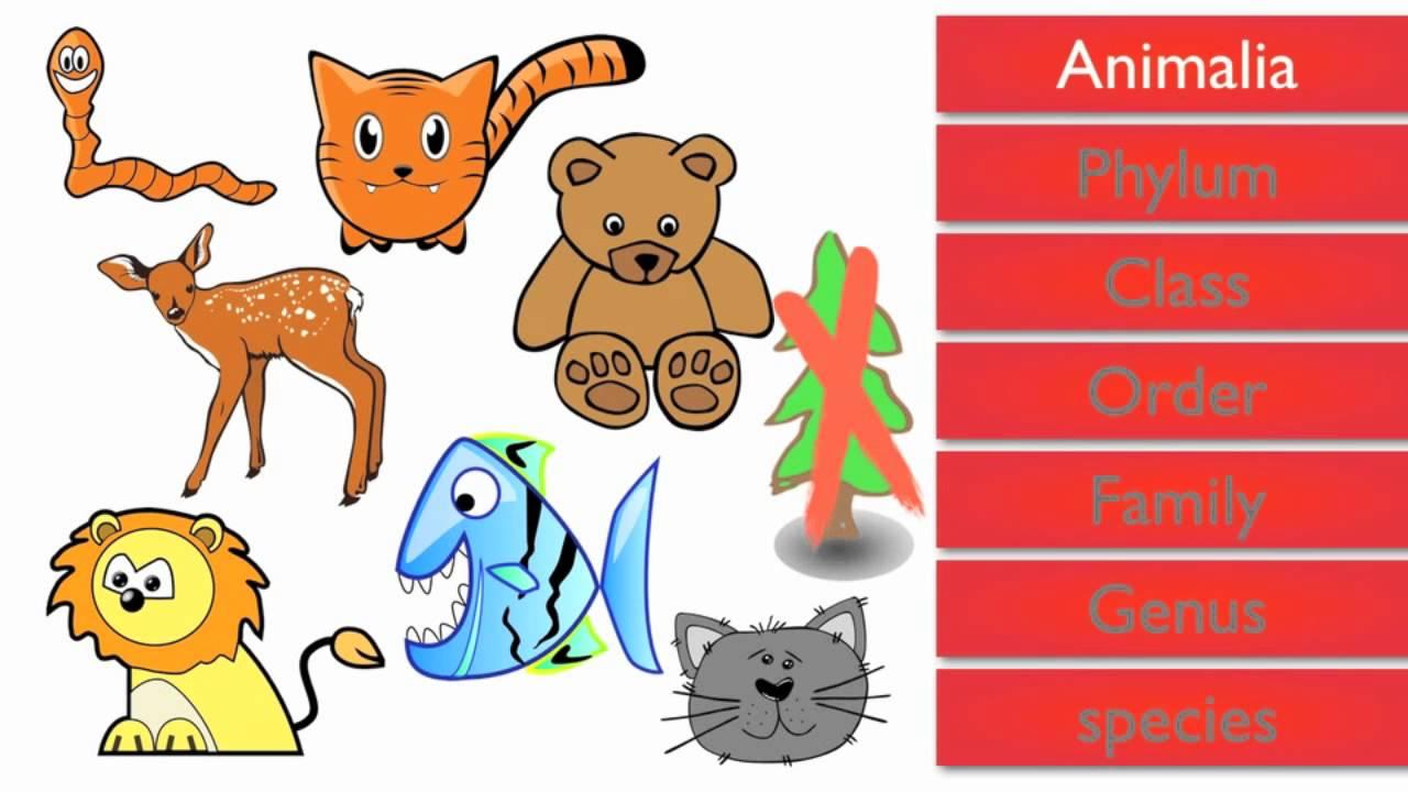 animal kingdom worksheets