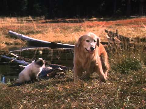 Homeward Bound: The Incredible... is listed (or ranked) 1 on the list The Best Live Action Animal Movies for Kids