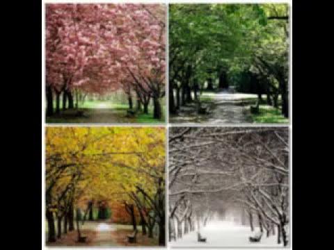 Árvore de bons frutos - Pregador Luo e Apocalipse 16, com letra