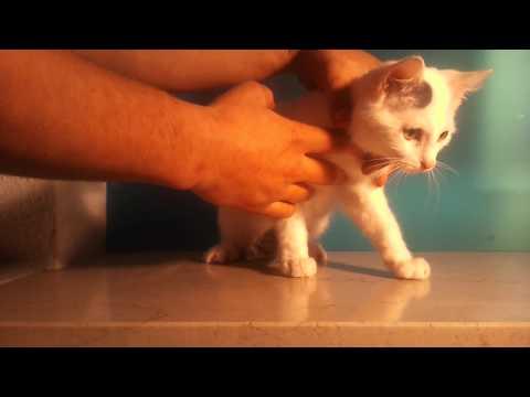 Einer Katze Medikamente Geben / Medikamente Verabreichen - So Geht's