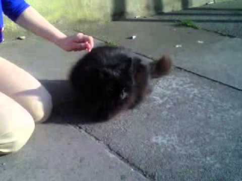 I Love Cats Xxx video