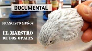 Francisco Muñoz: El maestro de los canarios Opales