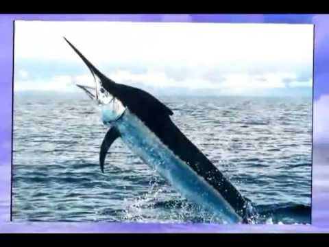 Costa Rica Sport Fishing Charters | Call (888) 995-1507 Today!