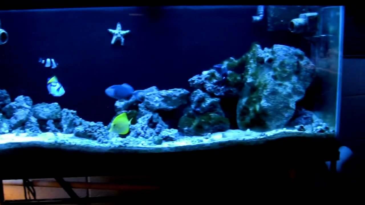 55 gallon fowlr tank tour youtube for 55 gallon fish tank setup