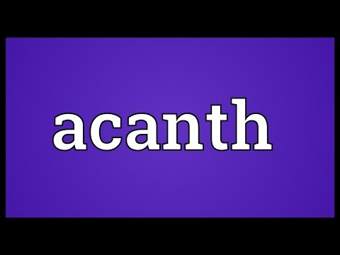 Header of Acanth