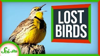 North America's 3 Billion Lost Birds | SciShow News