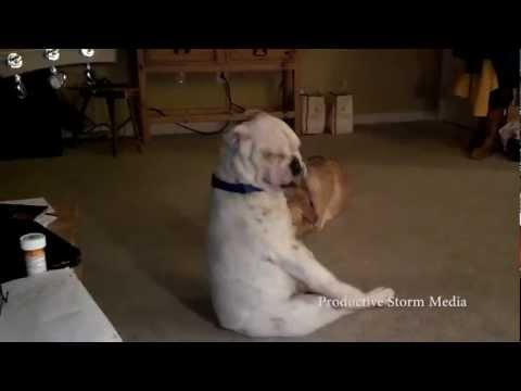Dog Feelin' the Blues
