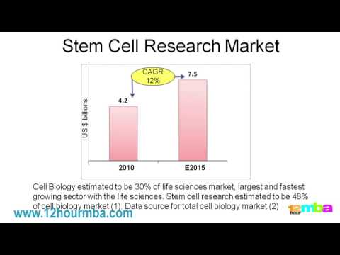 How to understand stem cells - growth drivers