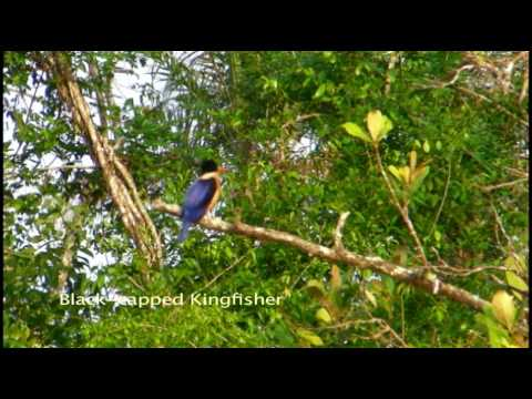 Sensational Sundarbans of Bangladesh - Part 1