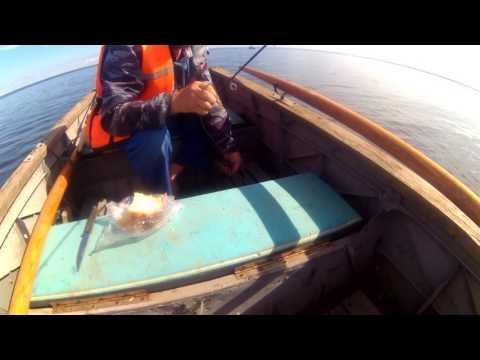 Супер рыбалка на окуня