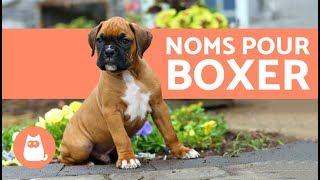 Noms de chiens boxer