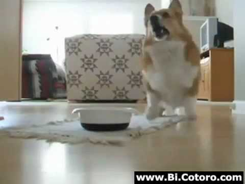 Dog Dance while eating his food amazing