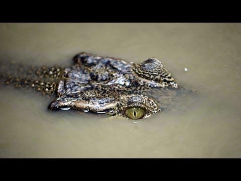 Man Eaten By Crocodile