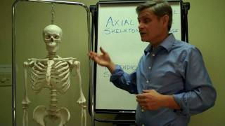 Axial + Appendicular Skeleton Part I